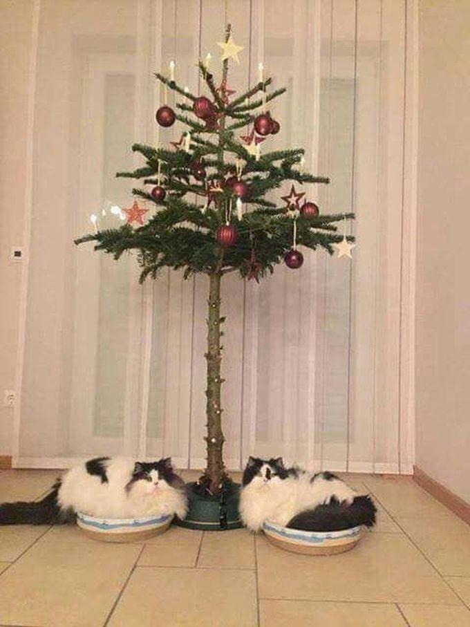 Kiefer Sutherland Attacks A Christmas Tree - JustPost: Virtually ...