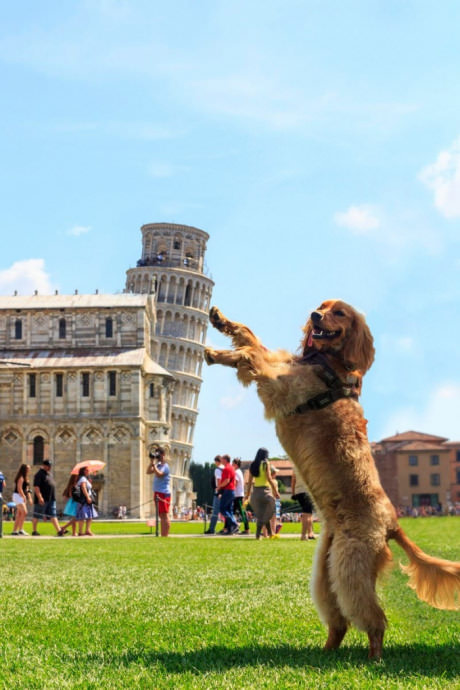 dog leaning against the leaning tower of pisa