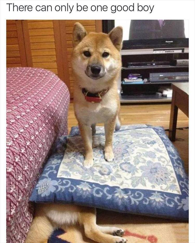there can only be one good boy, doge standing on pillow on top of other doge