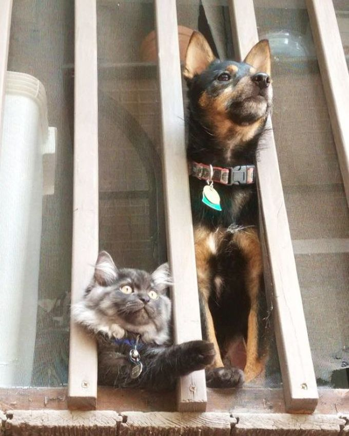 dog and cat share a balcony view