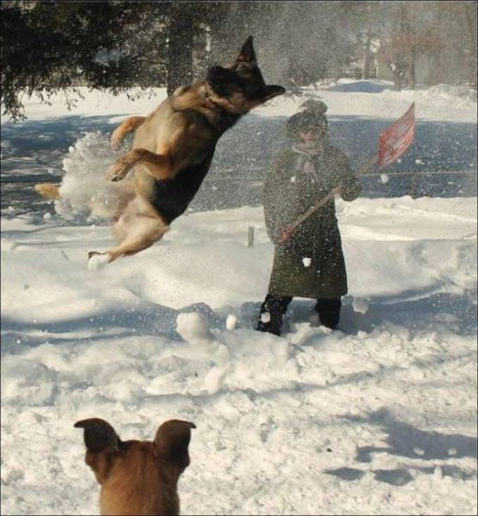 dog getting air in snow fight