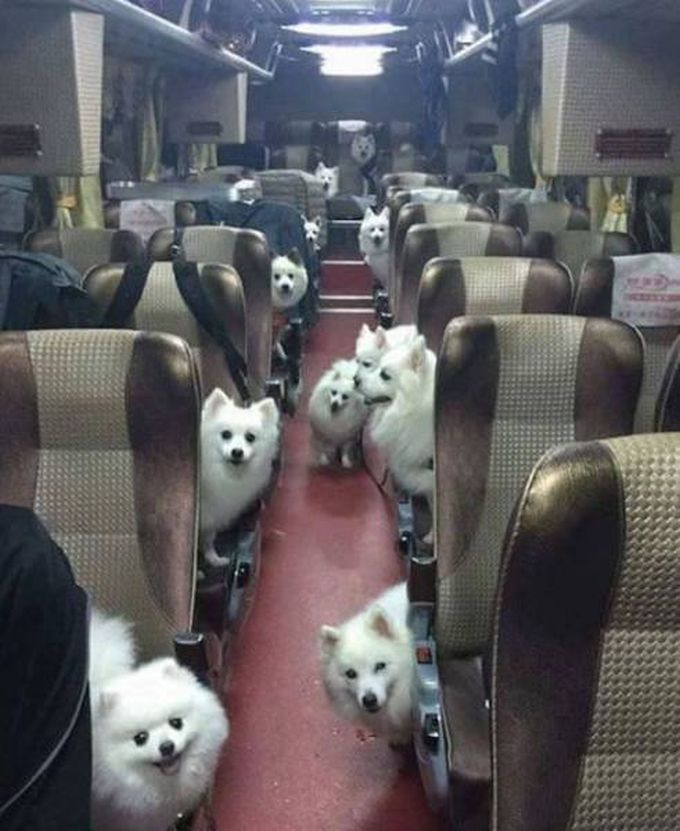 when you get on a bus in the wrong part of town, bus full of dogs