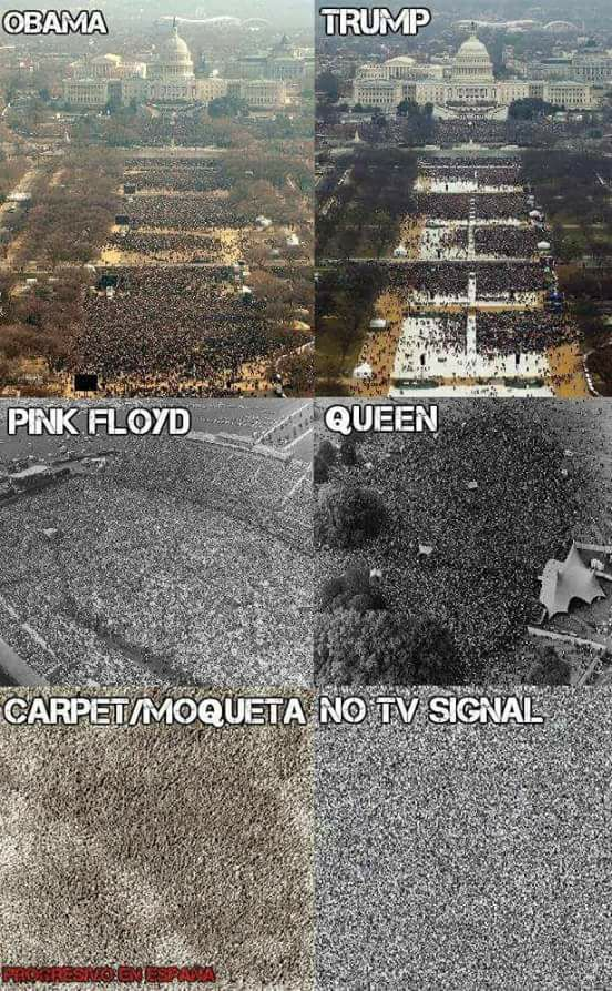 obama, trump, pink floyd, queen, carpet, no tv signal
