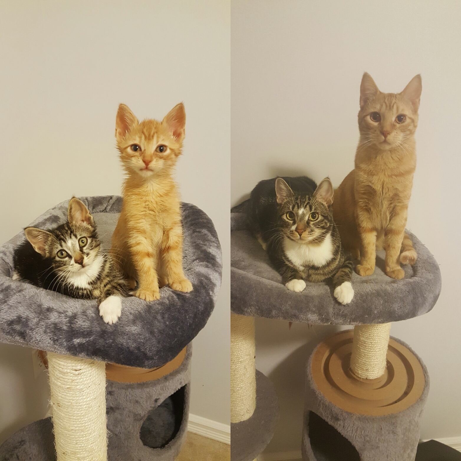 kittens to cats then and now