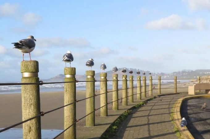 when posts are way too redundant, line of identical looking birds on fence posts