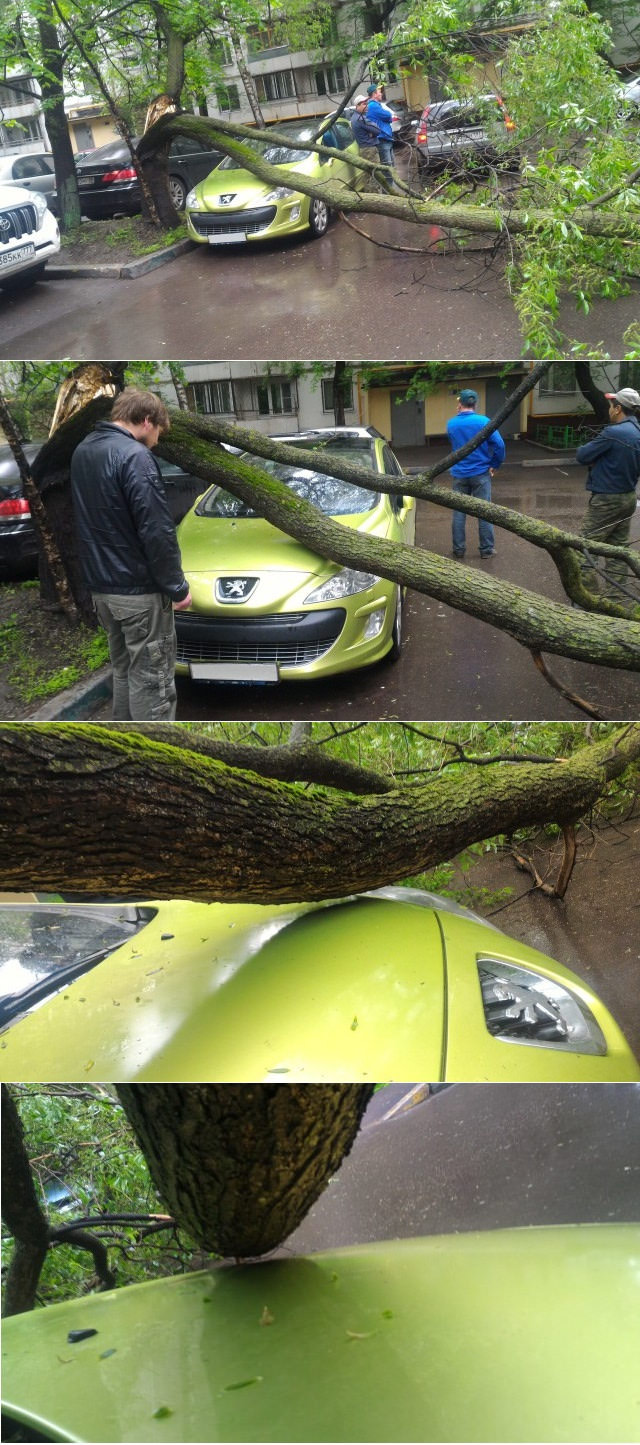 fallen branch just centimetres above car hood, close call