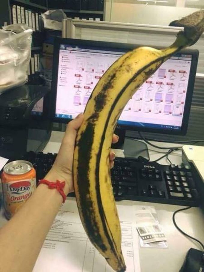 really big banana