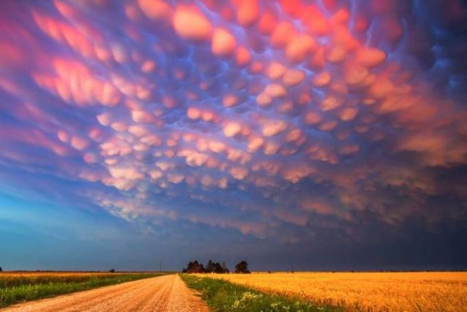 pink cotton puff clouds over a field