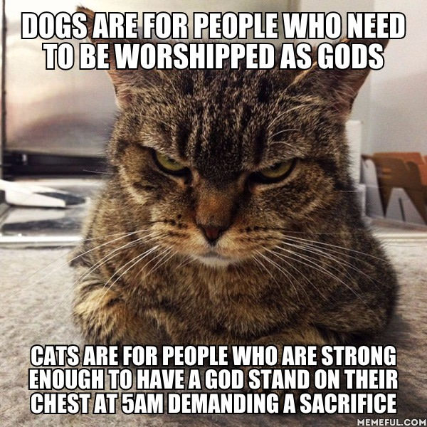 dogs are for people who needs to be worshipped as gods, cats are for people who are strong enough to have a god stand on their chest at 5am demanding a sacrifice, meme