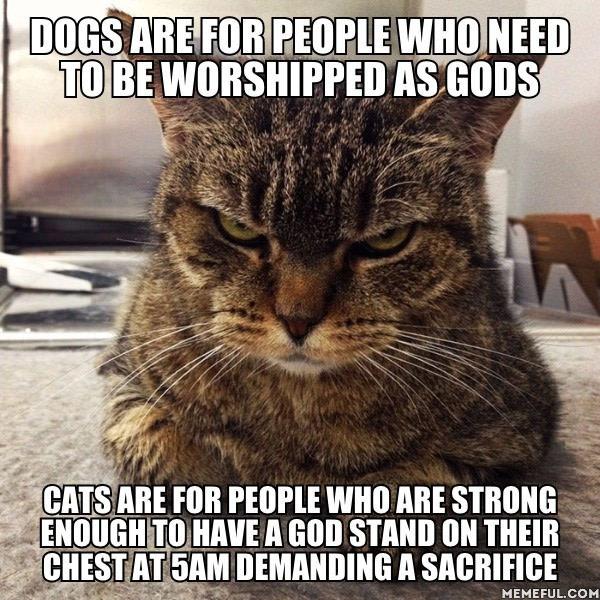 Cats Dogs Gods Meme
