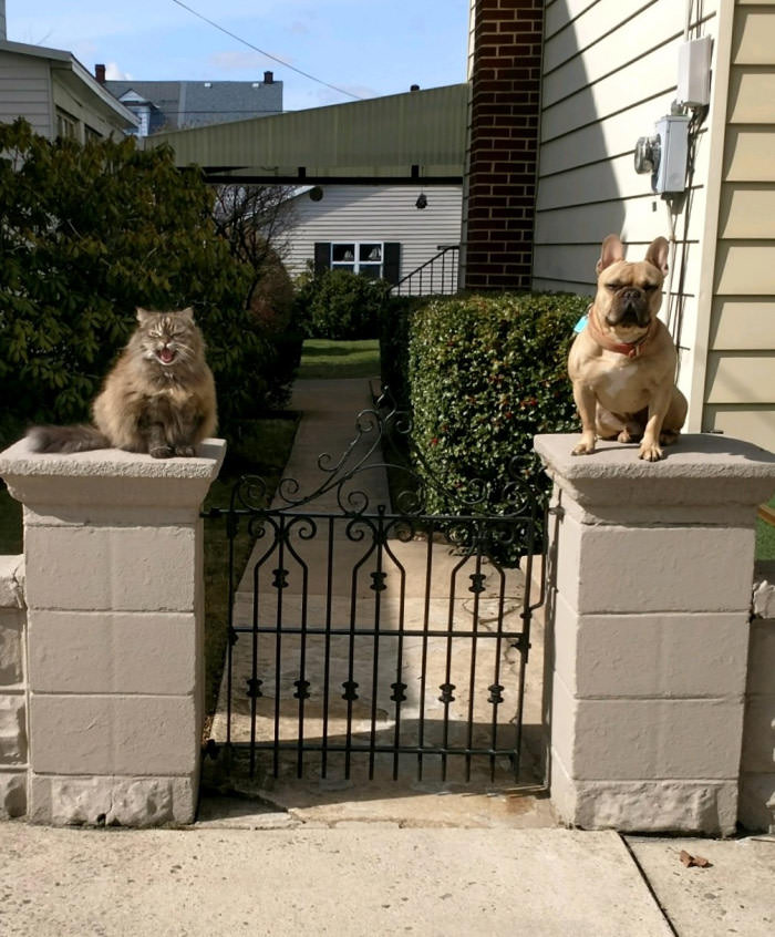 what's the password?, dog and cat on either side of fence pillars