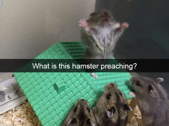 what is this hamster preaching?