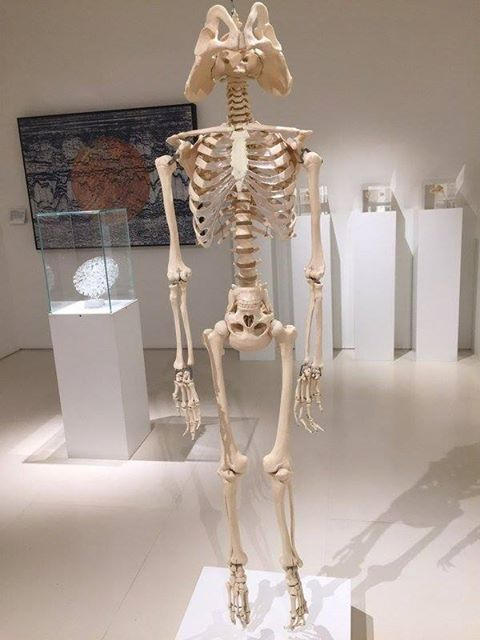 here is a skeleton representing what's inside half of the american voting population