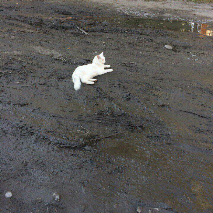 does this really bother anyone else?, white cat laying on wet mud