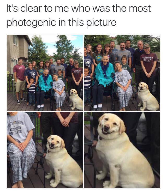 it's clear to me who was the most photogenic in this picture, smiling dog
