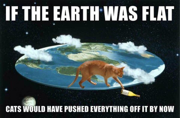 should i have a baby?if the earth was flat, cats would have pushed everything off it by now