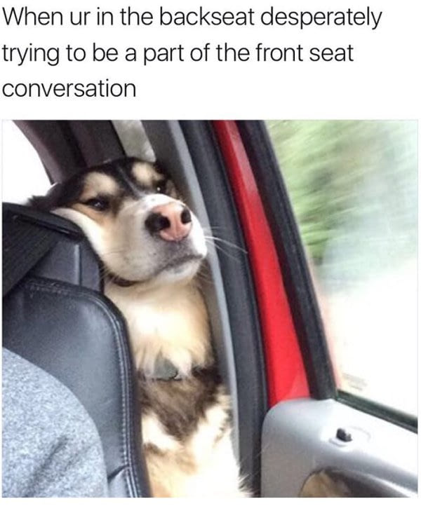 when your in the backseat desperately trying to be a part of the front seat conversation, dog in car