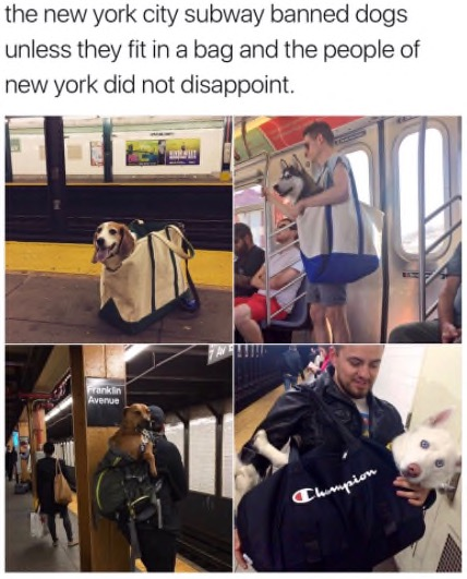 the new york city subway banned dogs unless they fit in a bag and the people of new york did not disappoint