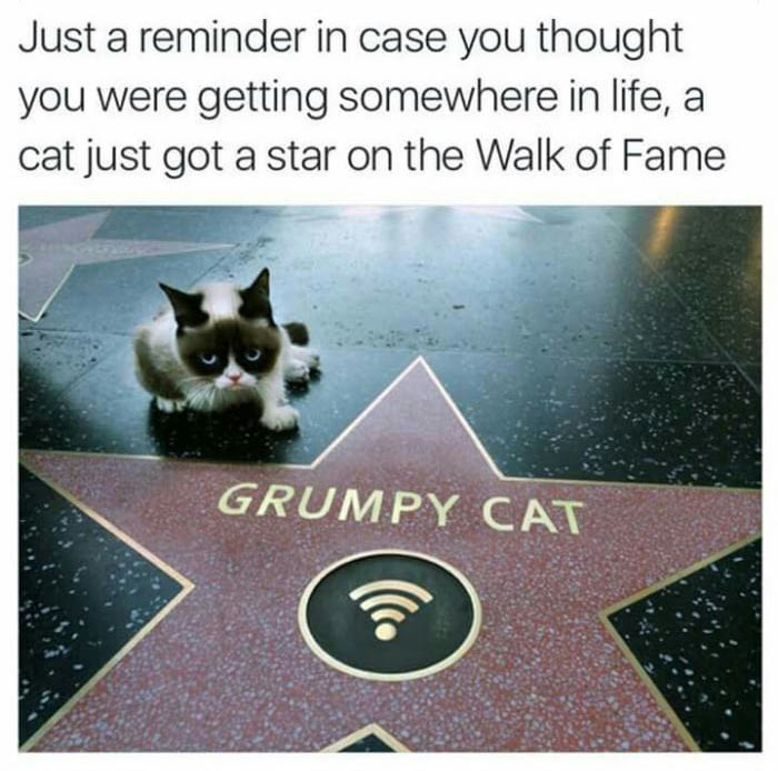 just a reminder in case you thought you were getting somewhere in life, a cat just got a star on the walk of fame