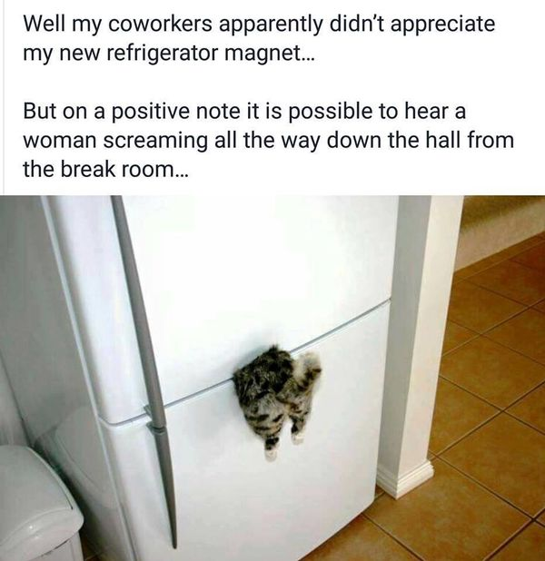 well my coworkers apparently didn't appreciate my new refrigerator magnet, but on a positive note it is possible to hear a woman screaming all the way down the hall from the break room, cat stuck in fridge