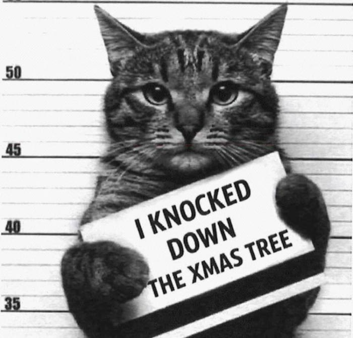 i knocked down the xmas tree, mug shot cat