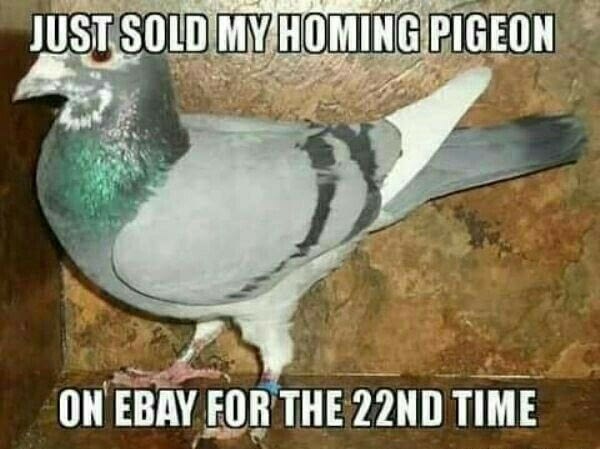 just sold my homing pigeon on ebay for the 22nd time, meme