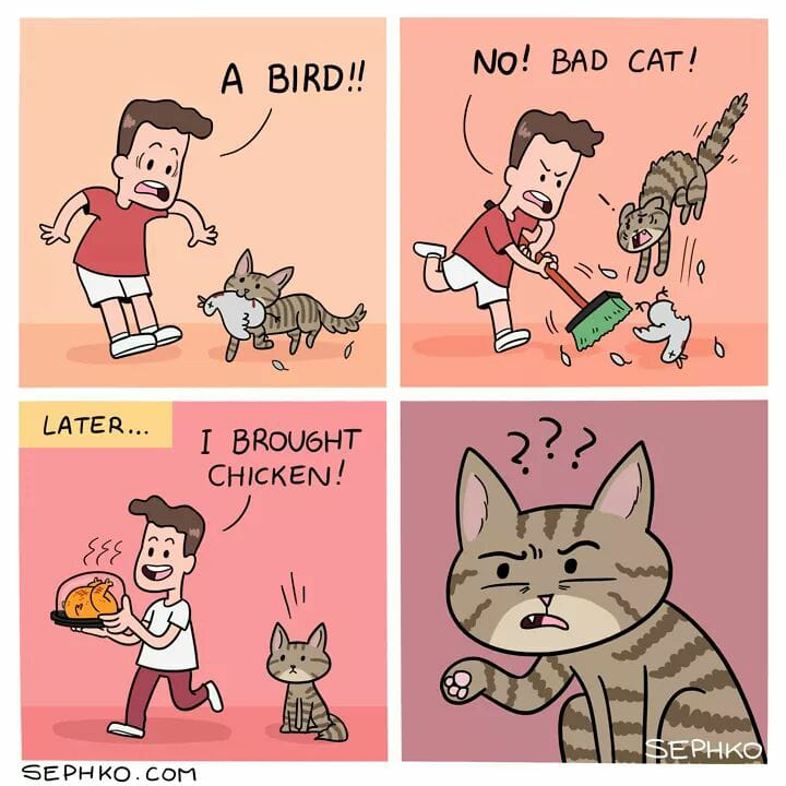 a bird? bad cat!, i brought chicken!, wtf, comic