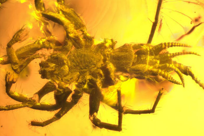 prehistoric demon looking spider soul trapped in amber