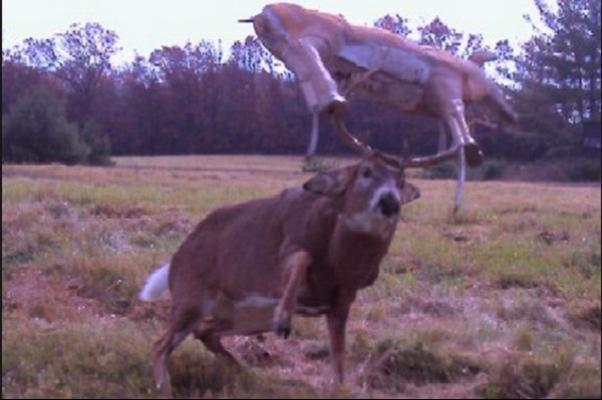 real wild life photos captured by trail cams