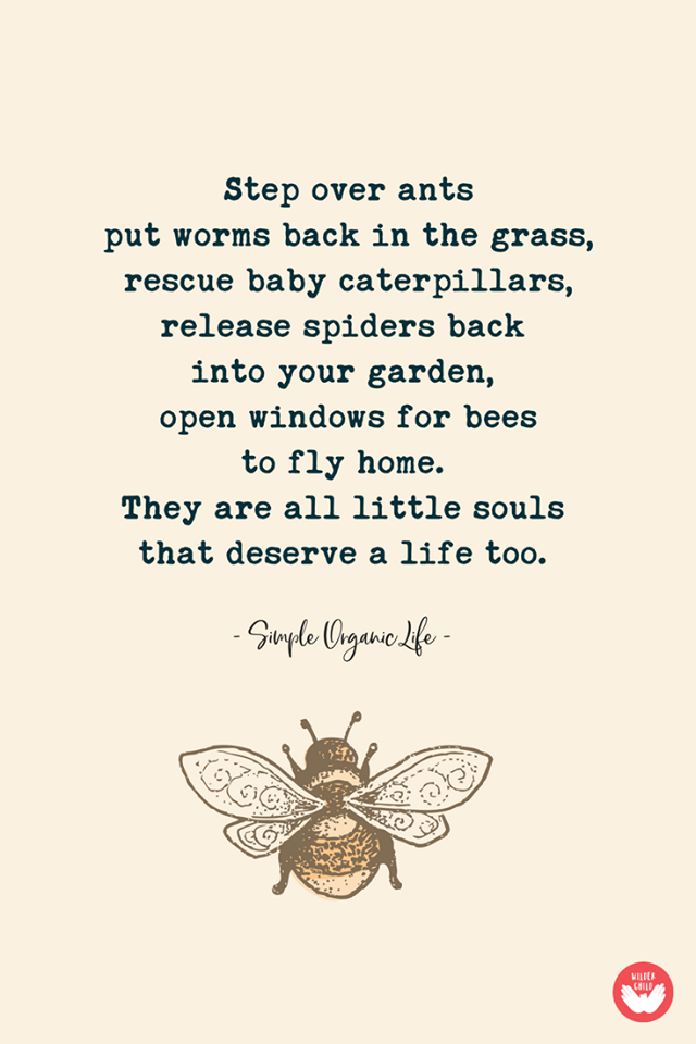 step over ants, put worms back in the grass, rescue baby caterpillaws, release spiders back into your garden, open windows for bees to fly home, they are all little souls that deserve a life too