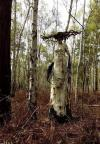 freaky dead tree carving of witch from birch