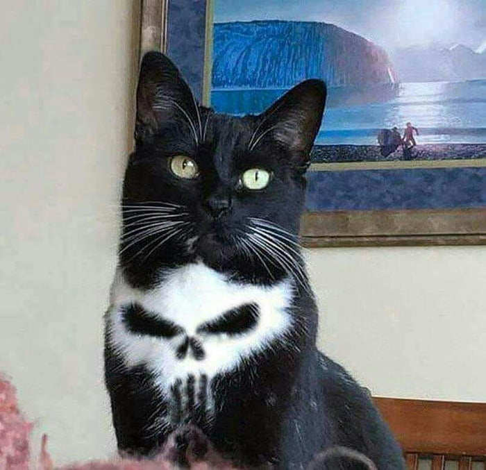 our cat is a real punisher, skull fur pattern
