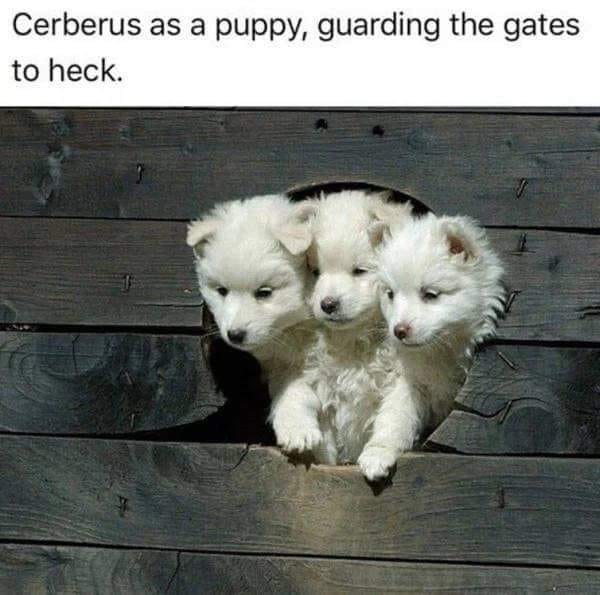 cerberus as a puppy, guarding the gates to heck