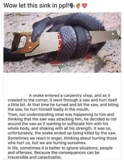 a snake entered a carpentry shop, it went through a saw and hurt itself a little bit, at that time he turned and bit the saw and hurt himself, in life sometimes it is better to ignore situations, people and offences