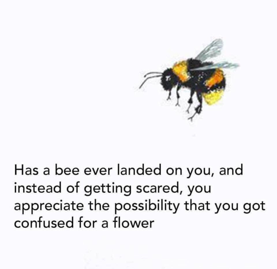 has a bee ever landed on you, and instead of getting scared, you appreciate the possibility that you got confused for a flower