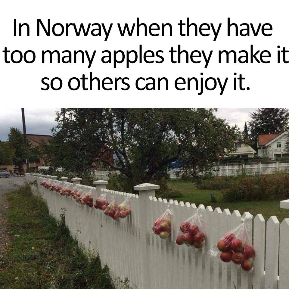 in norway when they have too many apples they make it so others can enjoy it