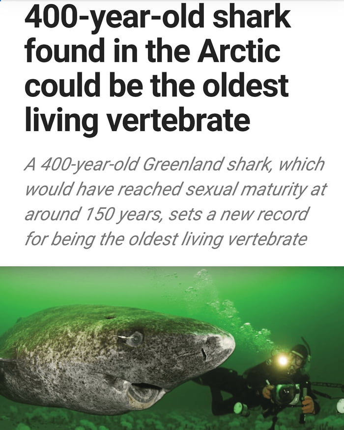 400 year old shark found in the arctic could be the oldest living vertebrate, which would have reached sexual maturity at around 150 years, sets a new record for being the oldest living vertebrate