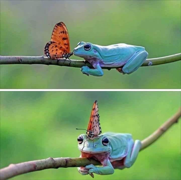 frog and butterfly friends
