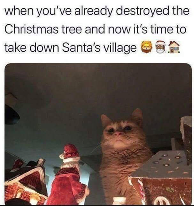 When You Ve Already Destroyed The Christmas Tree And Now It