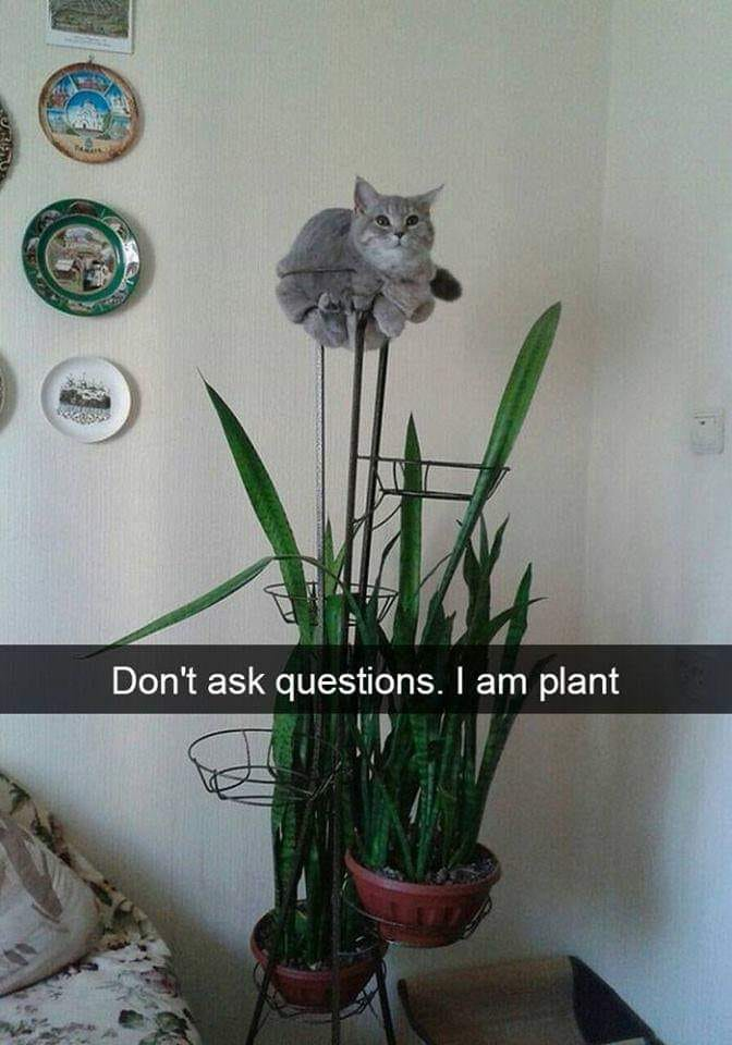 don't ask questions, i am plant, cat plant