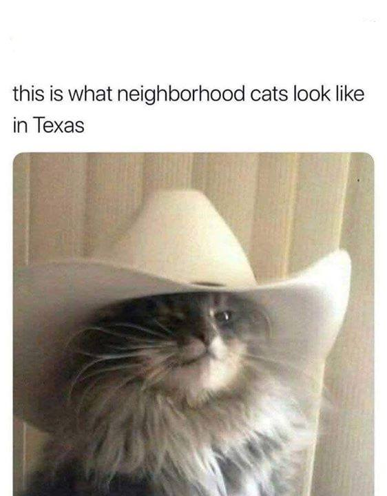 this is what neighbourhood cats look like in texas