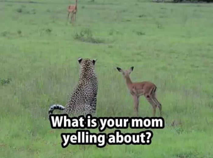 what is your mom yelling about?
