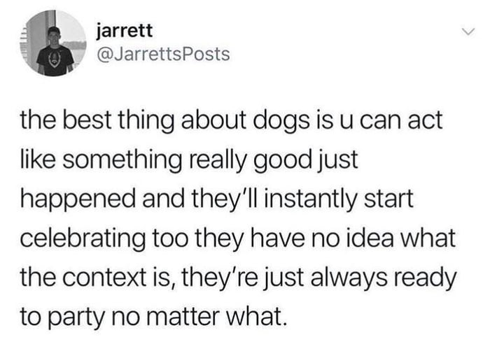 the best thing about dogs is you can act like something really good just happened and they'll instantly start celebrating too, they have no idea what the context is, they're just always ready to party no matter what