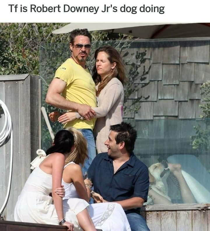 tf is robert downey junior's dog doing