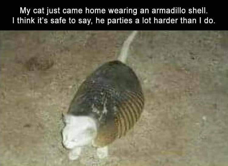 my cat just came home wearing an armadillo shell, i think it is safe to say, he parties a lot harder than i do