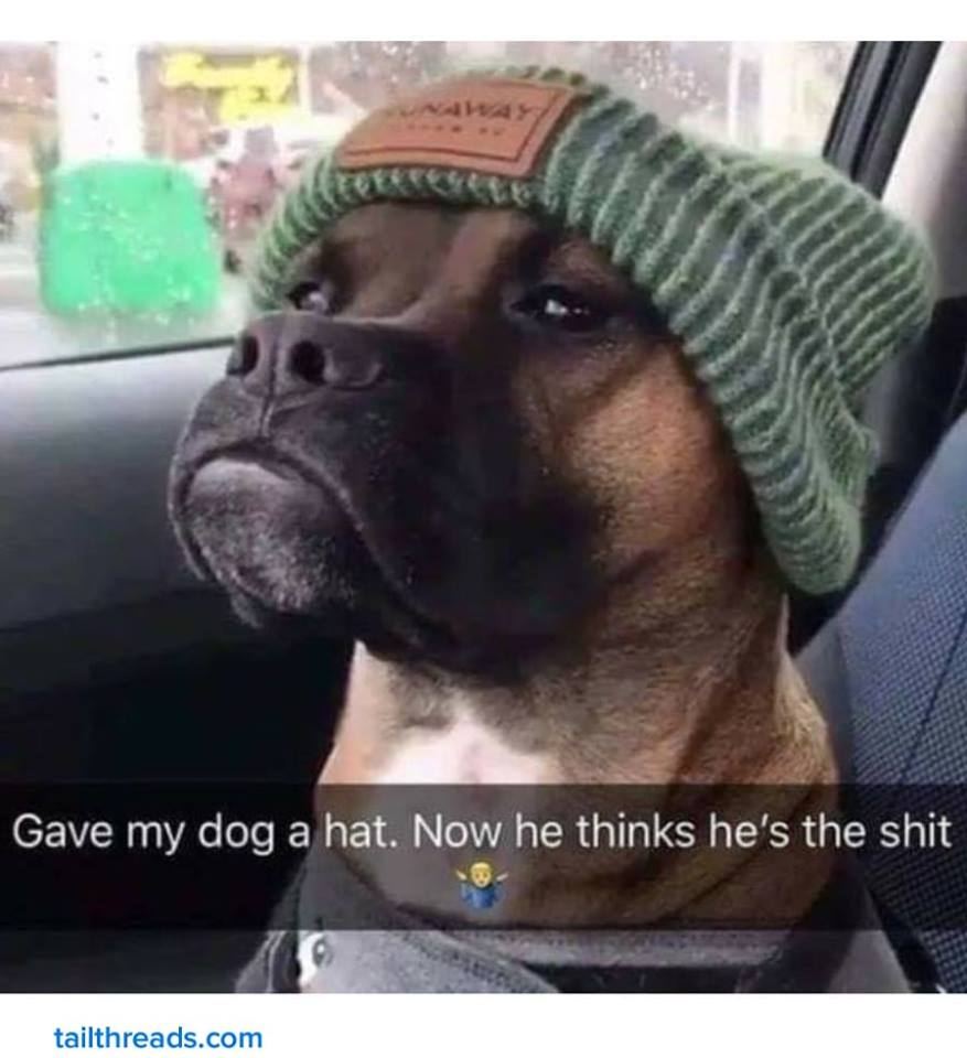 gave my dog a hat, now he thinks he's the shit