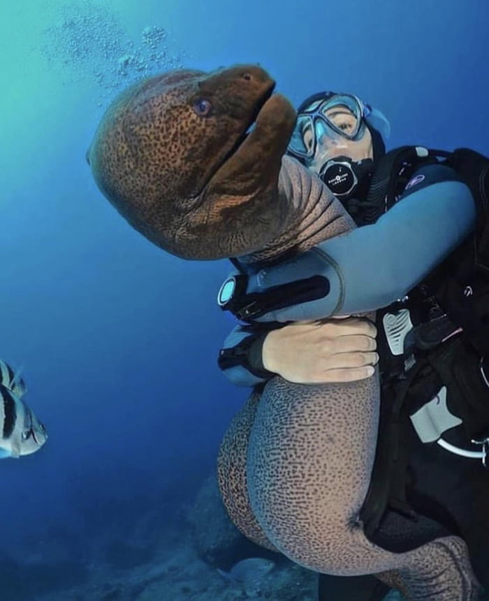 can you not?, eel hug unwanted