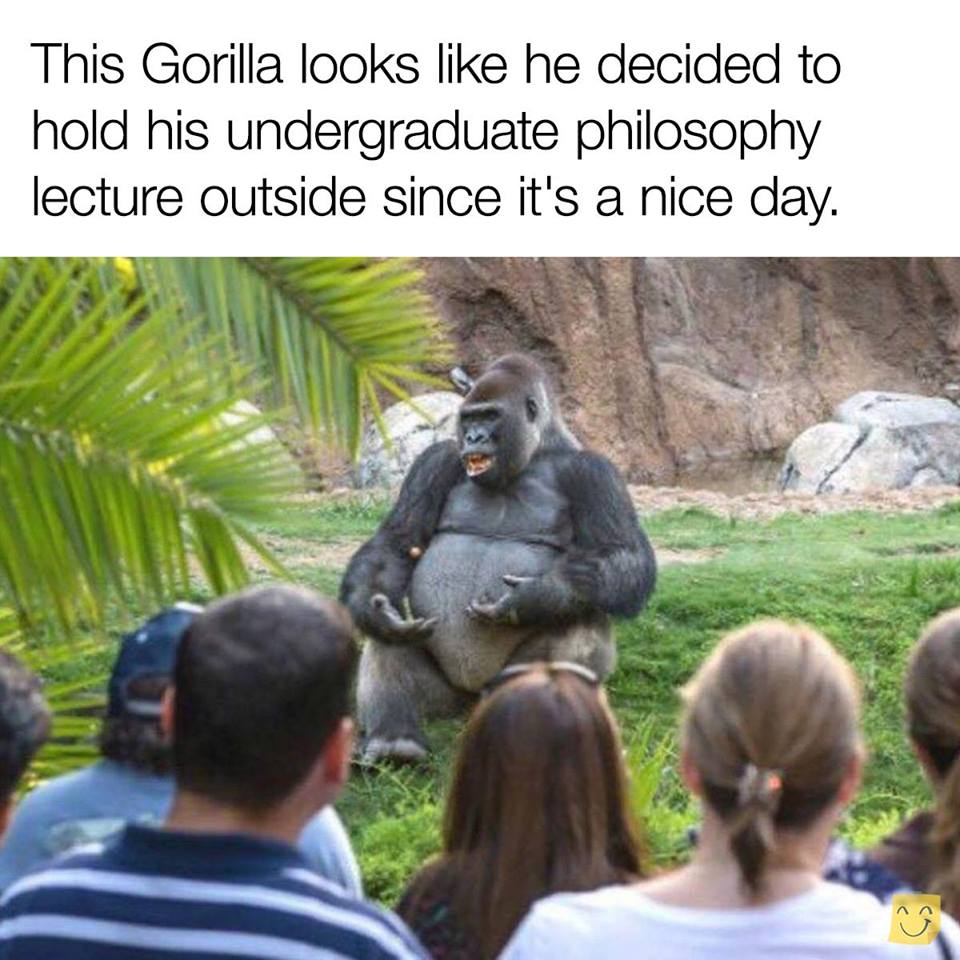 this gorilla looks like he decided to hold his undergraduate philosophy class outside since it's a nice day