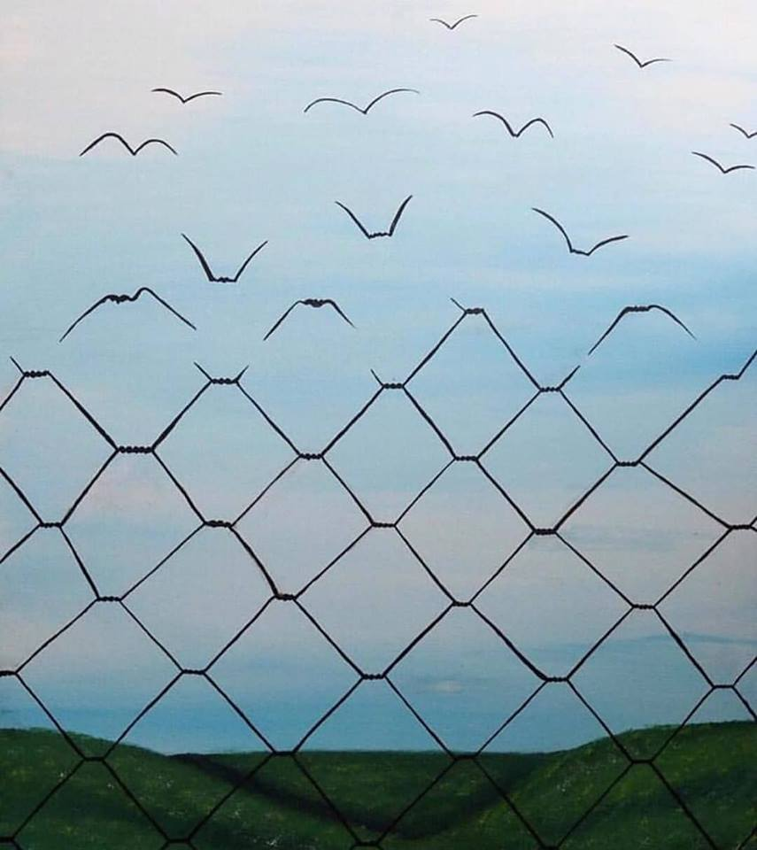 fences to freedom, birds