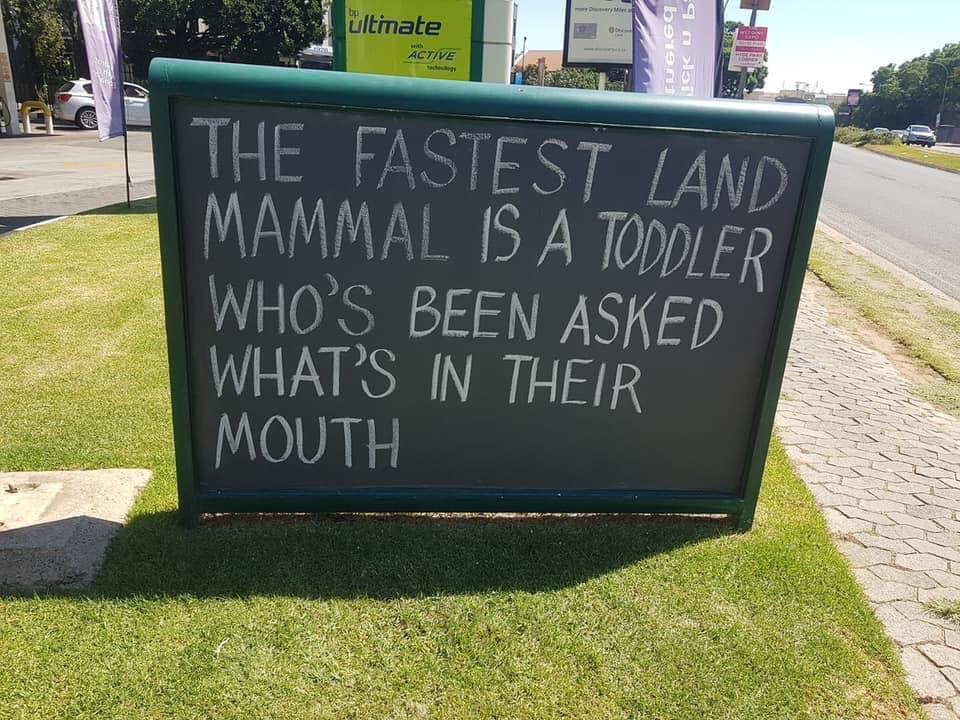 the fastest land mammal is a toddler who's been asked what's in their mouth